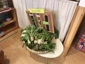 獲れた野菜は触れられるようにして展示。